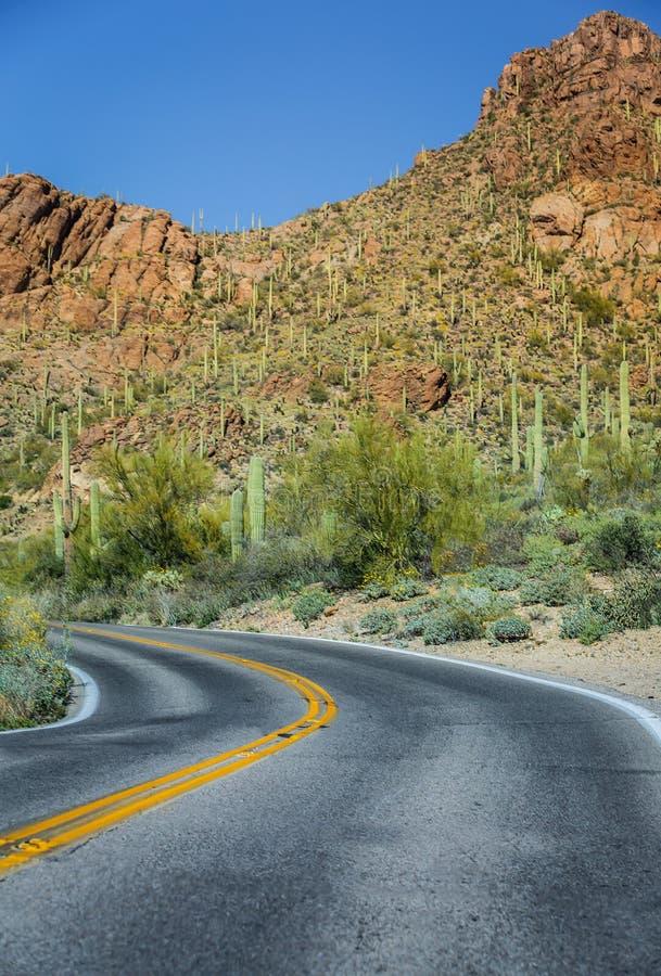 Дорога национального парка Saguaro Аризоны стоковая фотография rf