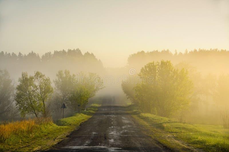 Дорога на зоре в лесе стоковые изображения