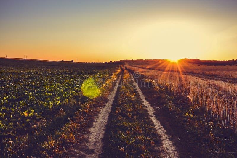 Дорога около пшеничного поля на заходе солнца против предпосылки Беларуси неба градиента, Grodno стоковые изображения