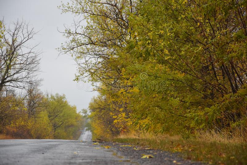 Дорога осени выходя в расстояние стоковая фотография
