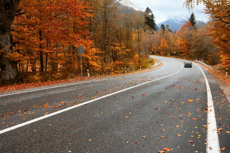 Дорога осени в лесе стоковые изображения