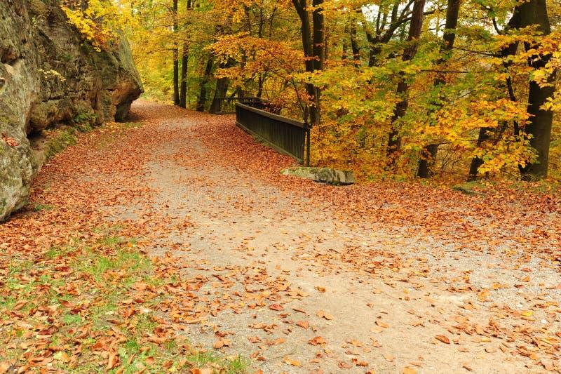 Дорога осени с листьями стоковая фотография rf