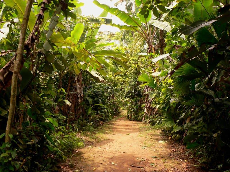 дорога Панамы джунглей стоковое изображение