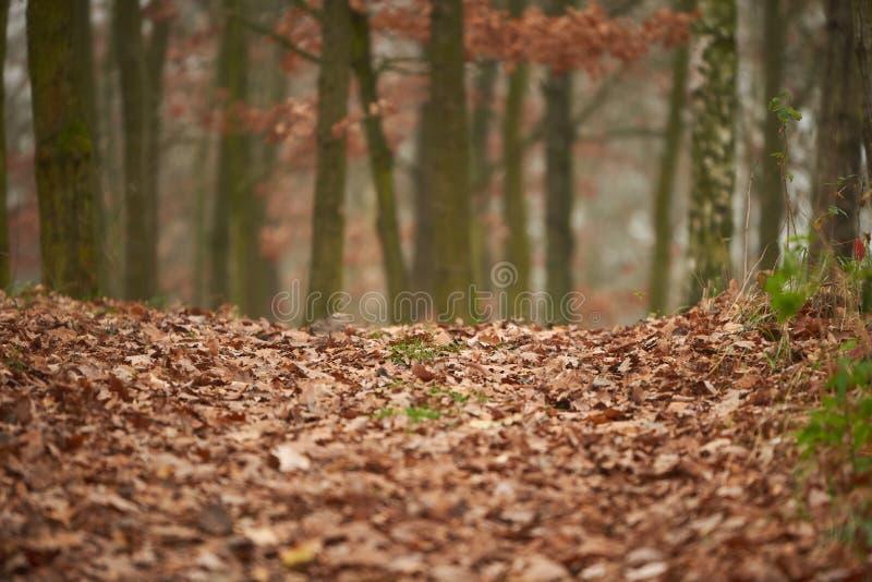 Дорога покрытая с листьями осени стоковая фотография