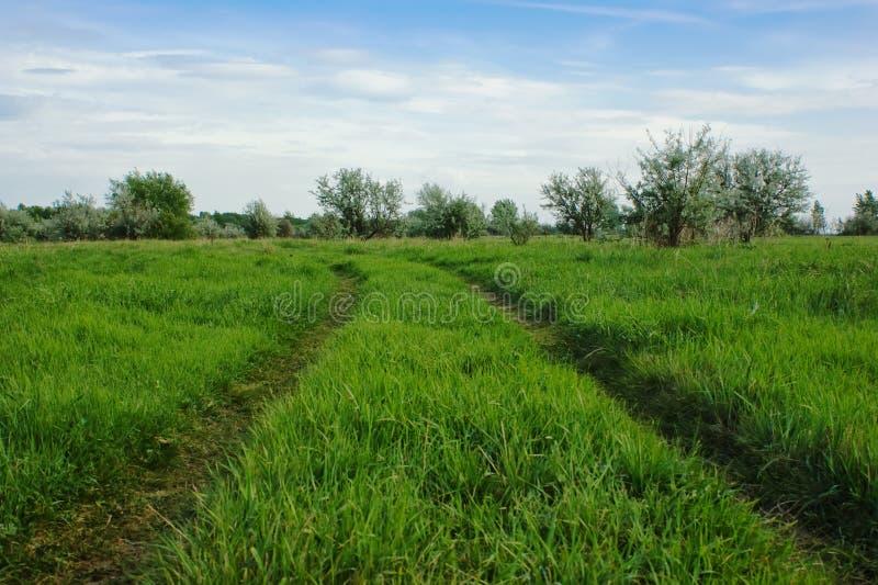дорога поля зеленая стоковое изображение rf