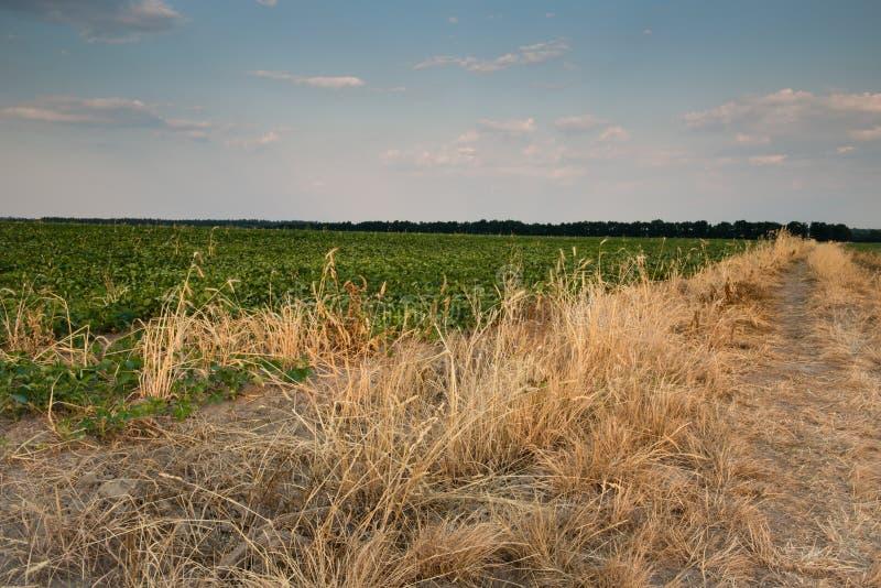 Дорога поля в заходе солнца стоковая фотография rf