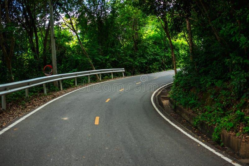 Дорога предпосылки ландшафта природы в лесе с деревом environ стоковая фотография rf