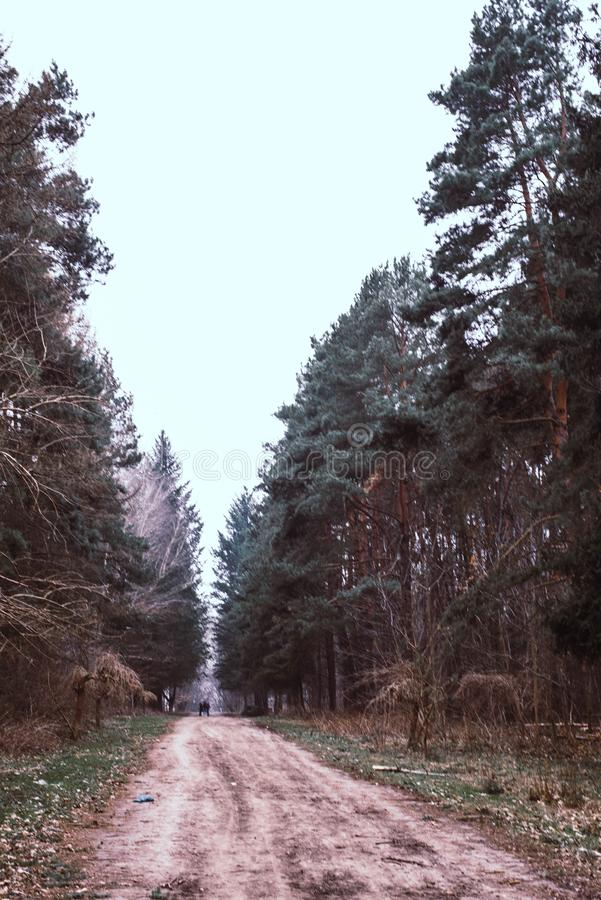 Дорога путь в древесинах стоковое изображение rf