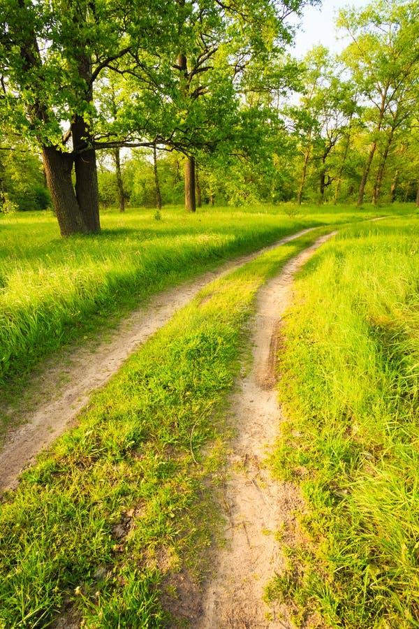 Дорога, путь, путь, майна в лесе зеленого цвета лета стоковая фотография rf