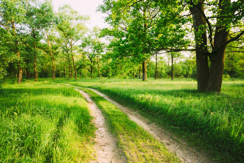 Дорога, путь, путь, майна в лесе зеленого цвета лета стоковая фотография