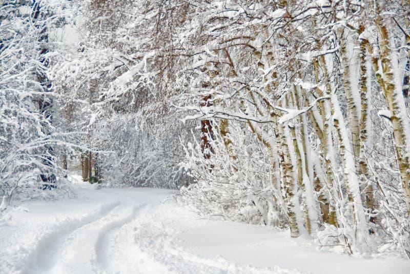 дорога пущи березы зимняя стоковое изображение