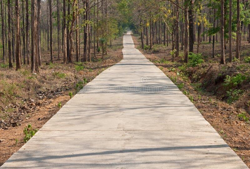 дорога пущи тропическая стоковое изображение