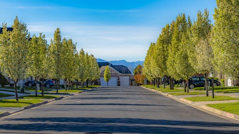 Дорога рамки панорамы выровнянная с домами и деревьями белый цвести на солнечный весенний день стоковая фотография rf