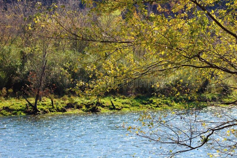 Дорога реки стоковые изображения
