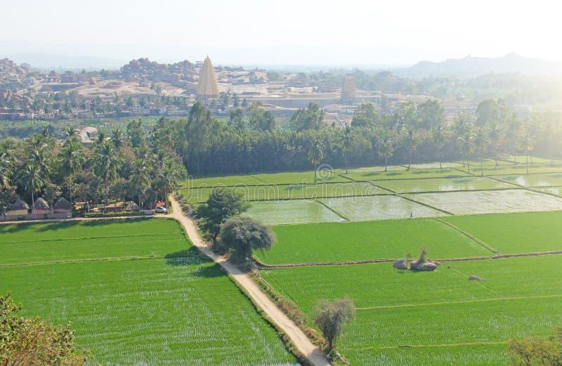 Дорога среди зеленых полей риса и терраса в деревне Hampi Пальмы, солнце, рис fields, большие камни Тропическое экзотическое стоковое изображение rf