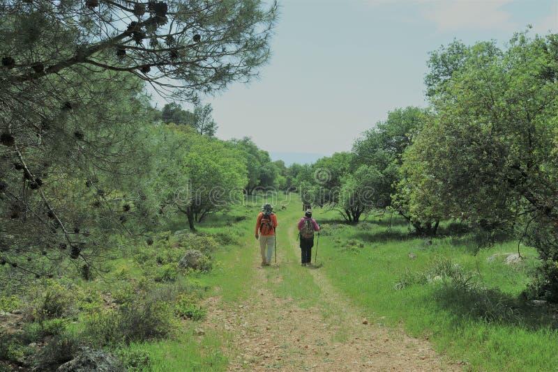 Дорога с hikers стоковое фото