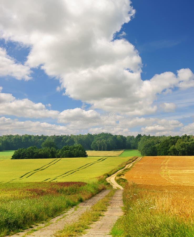 дорога фермы стоковое изображение rf