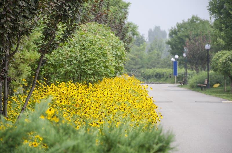 Дорога цветка стоковое фото rf