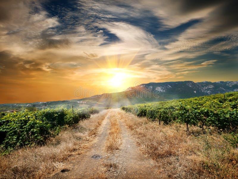 Дорога через виноградник стоковые фотографии rf