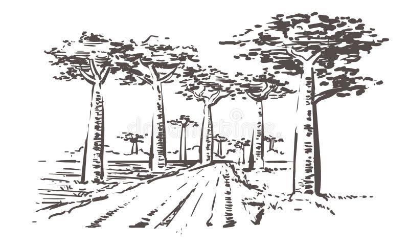 Дорога через деревья баобаба, Мадагаскар Иллюстрация эскиза Мадагаскара руки вычерченная иллюстрация вектора