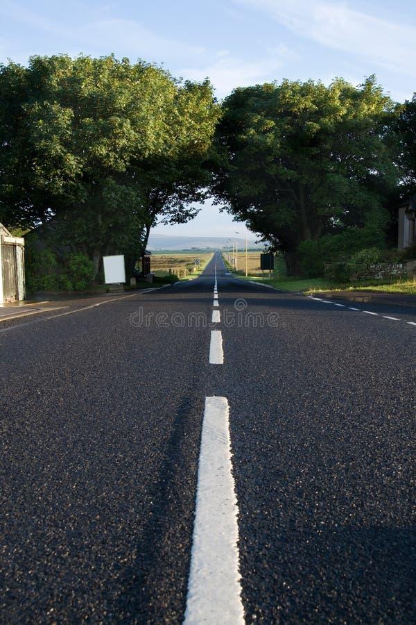 Дорога через деревья стоковые изображения rf