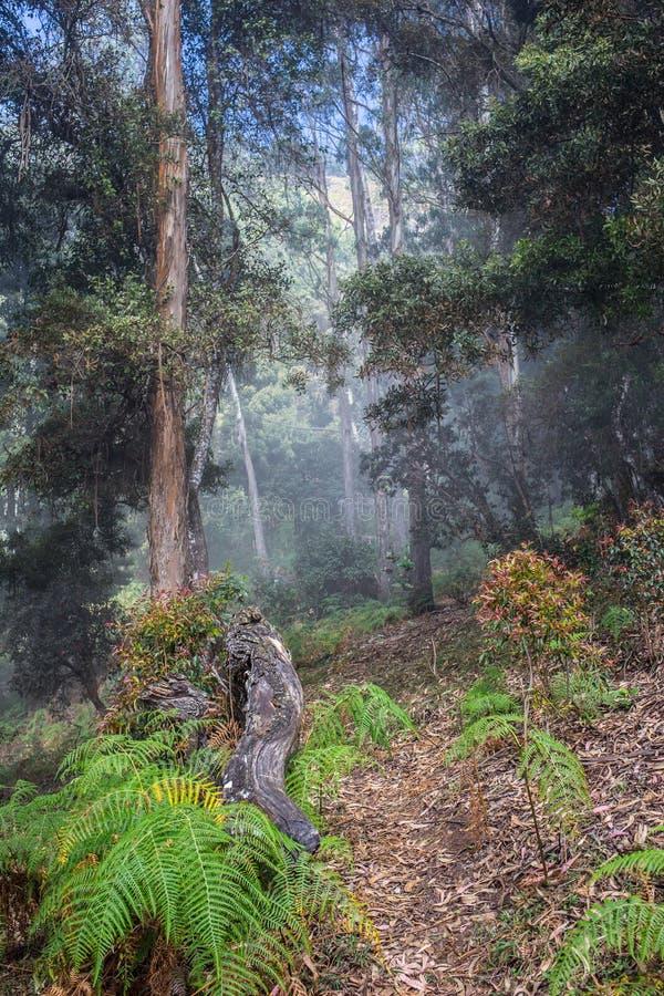 Дорога через золотой лес с туманом стоковое изображение rf