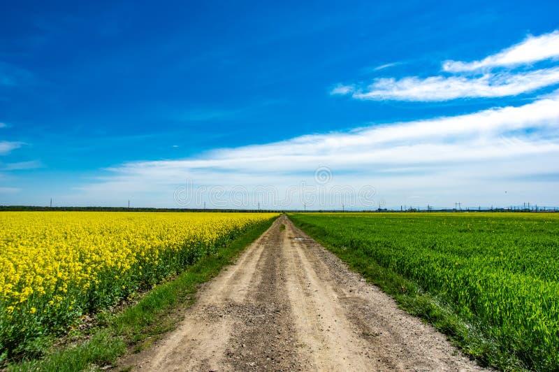 Дорога через канола поле стоковое изображение rf