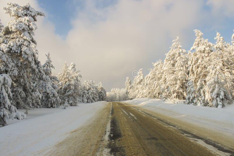 Дорога через лес зимы стоковое изображение