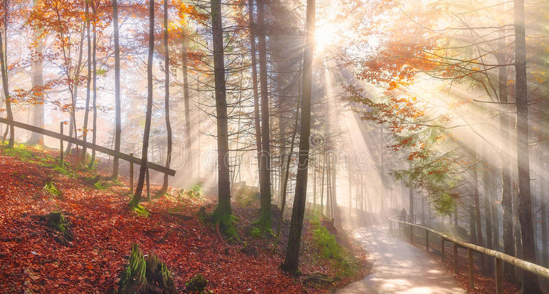 Дорога через лес и солнце осени излучает стоковое фото