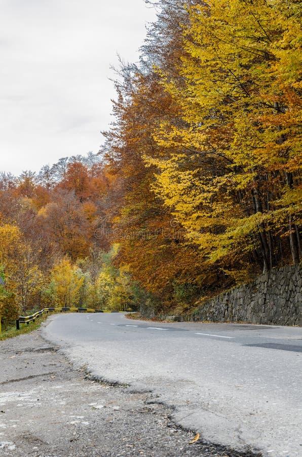 Дорога через пущу стоковые изображения rf