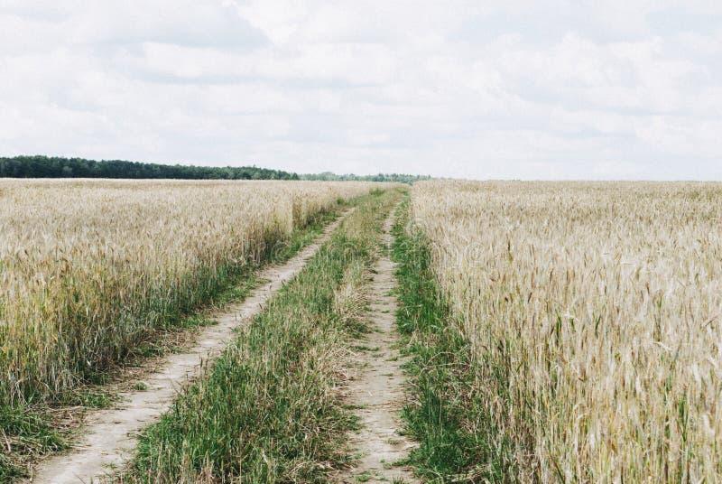 Дорога через пшеничное поле Пшеничное поле касается левому w стоковая фотография rf