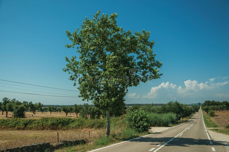 Дорога через сельский ландшафт с обрабатыванными землю полями и деревом стоковые фотографии rf