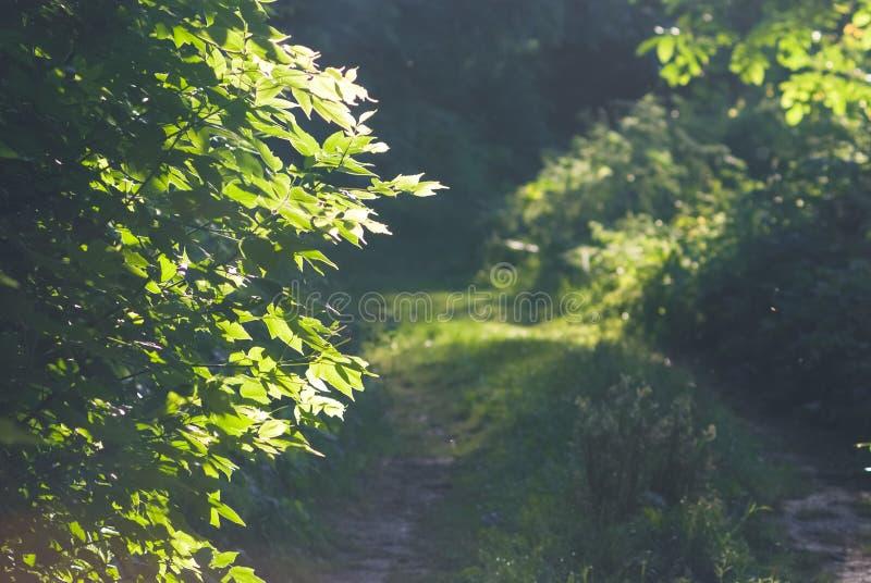 дорога через страшный лес на лете около места отдыха славная погода стоковое изображение