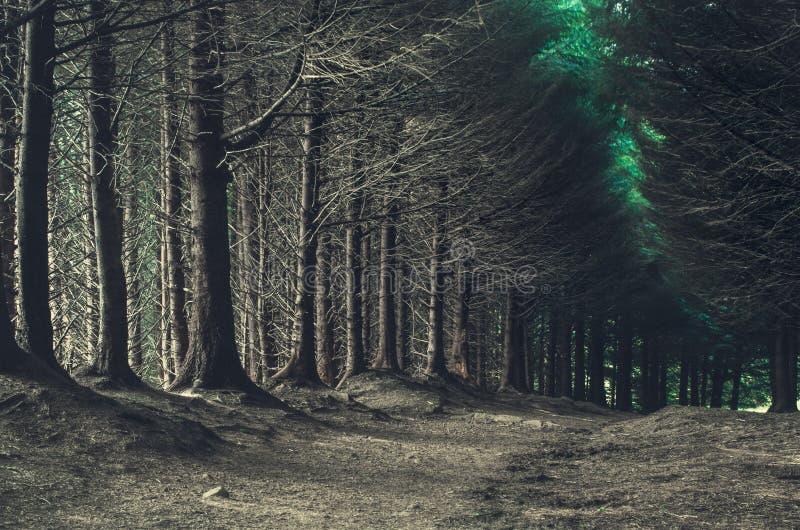 Дорога через темный лес в осени стоковое изображение rf