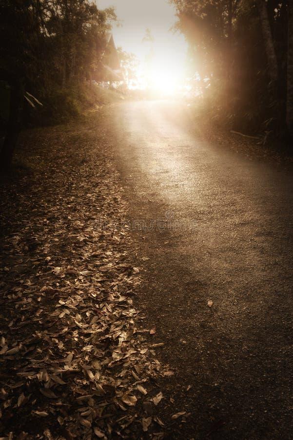 Дорога через темный лес леса стоковое фото