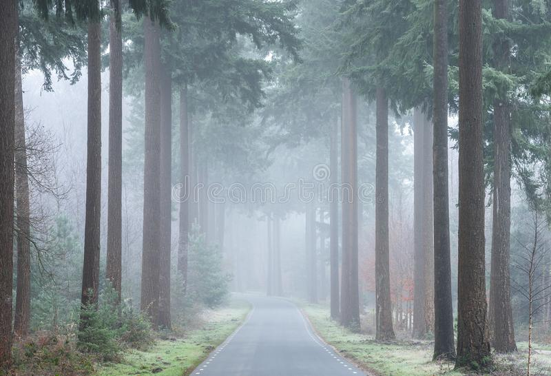 Дорога через туманное forrest в осени стоковые изображения