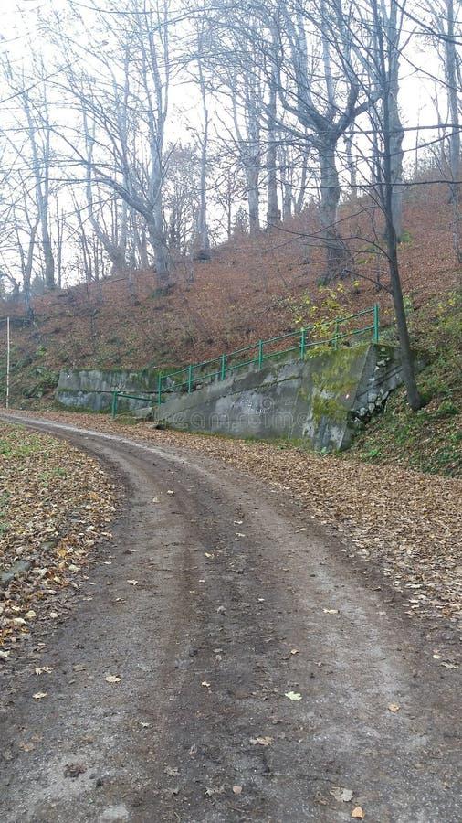 Download Дорога стоковое фото. изображение насчитывающей листья - 81802568