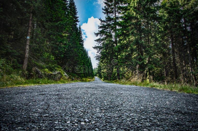 Дорога Apshalt в лесе стоковая фотография
