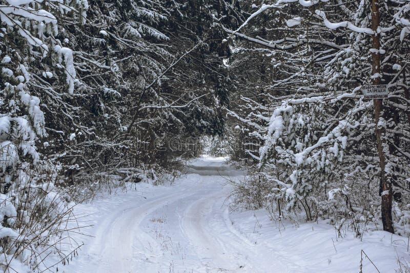 Дорога Snowy в лесе среди деревьев на ясный зимний день, Беларуси стоковое изображение