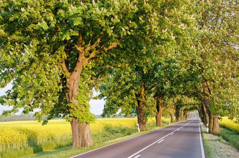 дороги Германии стоковое изображение rf