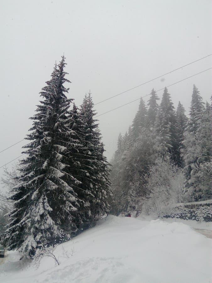 Дороги горы стоковое фото rf