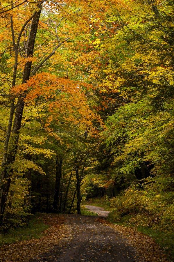 Дороги Одн-майны страны - лес положения Kumbrabow, Западная Вирджиния стоковое изображение rf
