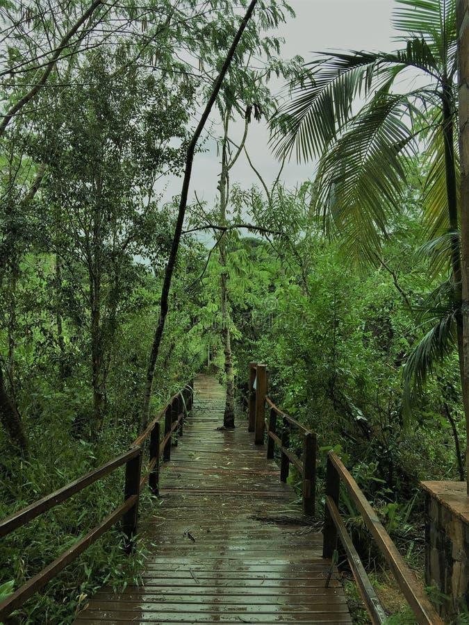 Дорожка в городке Iguazu джунглей Амазонки стоковые изображения