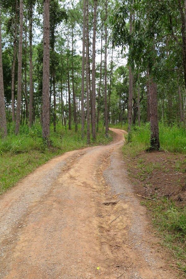 Дорожка в лес стоковые изображения