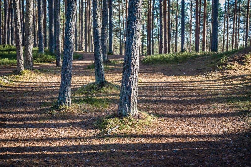 Дорожка в лесе, предыдущих веснах в запасе Ландшафт балюстрад стоковая фотография