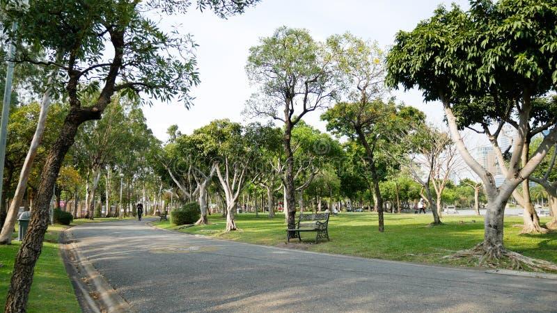 Дорожка в парке с лесом деревьев стоковые изображения rf