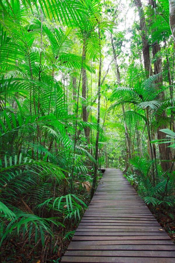 дорожка джунглей прямая стоковое изображение