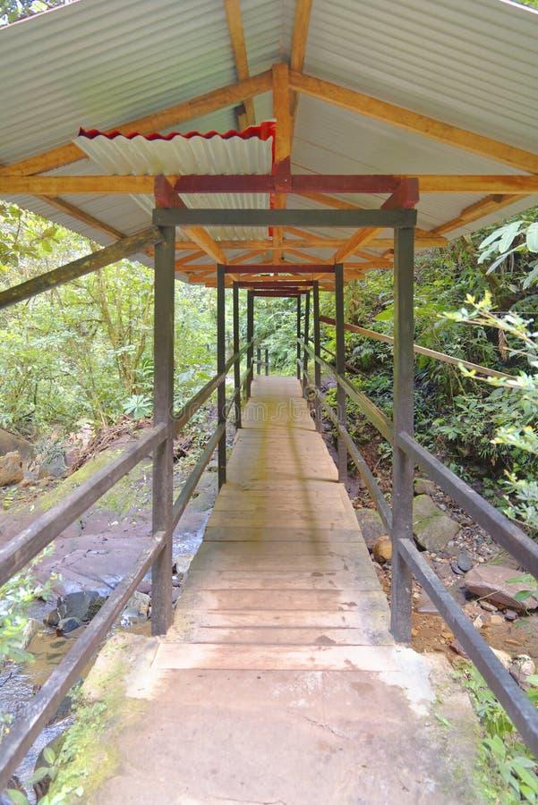 Дорожка джунглей стоковое изображение rf
