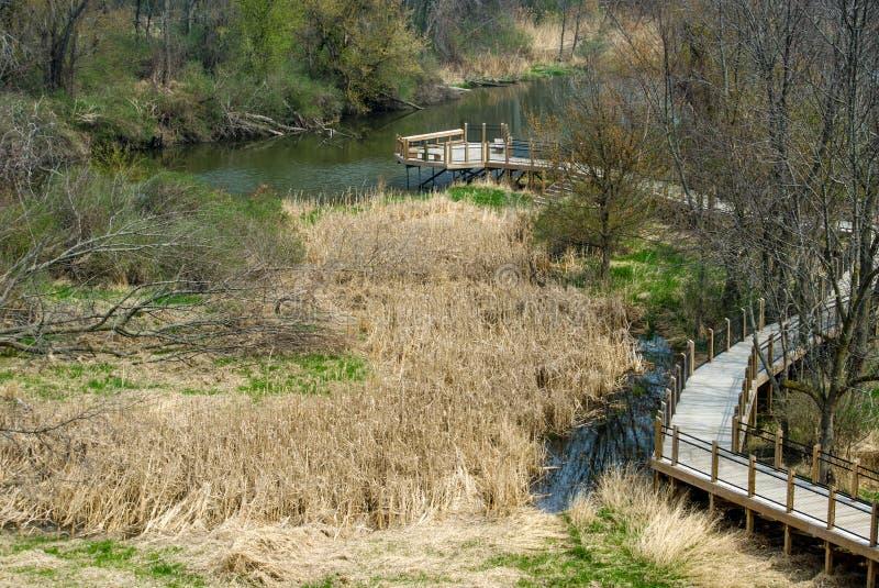 Дорожка над болотом стоковая фотография