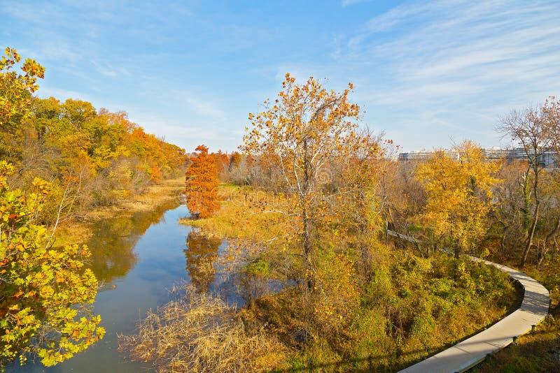 Дорожка на острове Теодора Рузвельта в осени в DC Вашингтона, США стоковые фото